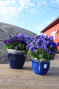 23.juli Tranøy 025